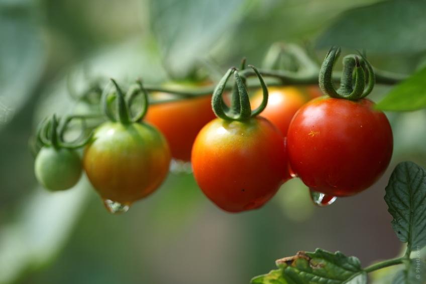 Beneficios-tomate
