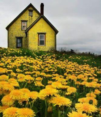 paisaje-de-colores-amarillos